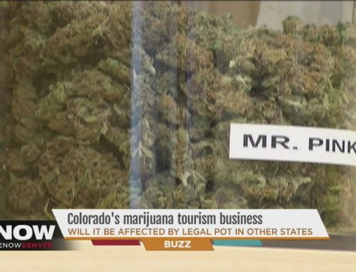 ABC 7 News Denver – Colorado's marijuana dispensaries not worried about losing sales to competition from other states
